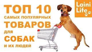 ТОП-10 товаров для собак