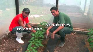 Inexpensive Cultivation Practices for Smallholder Farmers in Central America