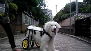 2009年5月の動画です。 車いすが来たばかりで、仮免練習中です。 なぜか...
