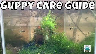 How to care for guppies. Guppy Care for Beginners