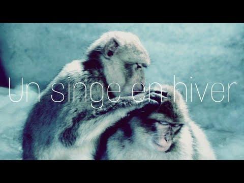 Indochine - Un singe en hiver (cover Juan EN)