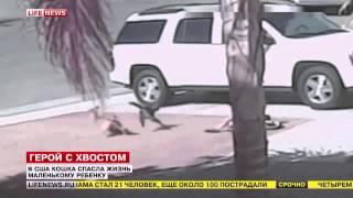 Кошка спасает ребенка от собаки. ПРИКОЛ. Cat saves the baby from the dog