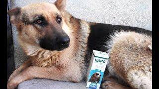 Воспаление уха у собак-лечение
