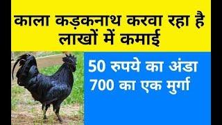 सबसे अधिक प्रॉफिट वाला बिजनेस | Black hen Kadaknath business in hindi