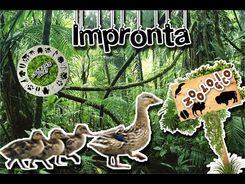 Imprinting | The first learning of animals | (Virtual Zoology) | Did You Know?