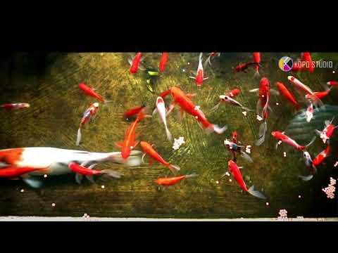 ikan mas koi ikan mas komet ikan ekor pedang dan ikan sapu sapu
