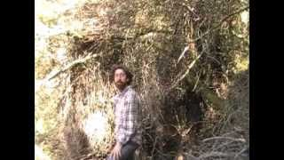 Silviculture in SD