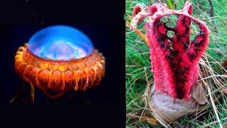 5 cose Aliene che esistono sulla Terra