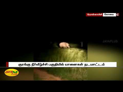 Forest dept. alerts people as Elephants found in large numbers in Monkey falls area  பொள்ளாச்சி குரங்கு நீர்வீழ்ச்சி பகுதியில் யானைகள் நடமாட்டம்... வனத்துறையினர் எச்சரிக்கை   Elephants   Monkey falls  #JayaPlus television is one among the foremost runner in Tamil News and media fields. Jaya plus comes under the whole brand of Jaya TV which includes four main stream channels. Jaya Plus live streams all major political happenings and current updates on a 24/7 basis daily. We cover recent updates of all genres like politics, media, movies, magazines with a policy of all under one roof. Apart from news we have talk shows and infotainment programmes like Achchum Asalum, Kelvigal Aayiram and Medhuva Pesunga.  Facebook - https://www.facebook.com/jayapluschannel/  Twitter - https://www.twitter.com/jayapluschannel  InstaGram - https://www.instagram.com/jayaplusnews/  Website - http://www.jayanewslive.com    Program Playlists :   Achum asalum - http://bit.ly/AchumAsalum  Medhuva Pesunga - https://www.youtube.com/playlist?list=PLeimZv3JlrlhTJ-LUI86bLKz2k2jBqwGW  Kelvigal Aayiram - https://www.youtube.com/playlist?list=PLeimZv3Jlrliz19ZEWCbx1IX8MRUndTk3  Makkal Manasu - https://www.youtube.com/playlist?list=PLeimZv3JlrliLJ6bdEmJ1QjyAd_bYR7qU  Special Stories - https://www.youtube.com/playlist?list=PLeimZv3Jlrli-sC79IKBT4esNoYVDO_Oh