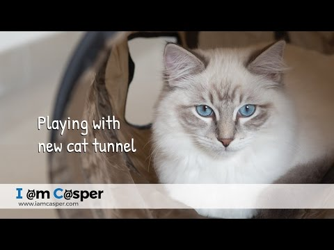 Cat play tunnel for casper ragdoll