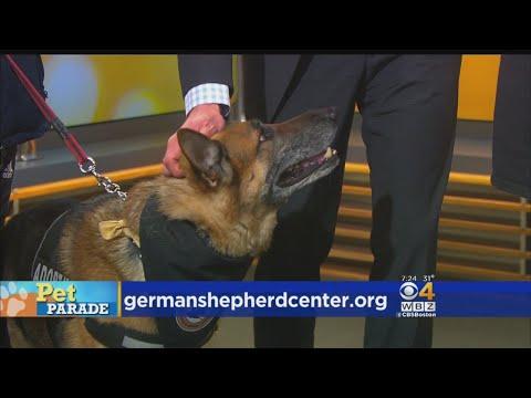 Pet Parade: German Shepherd Center