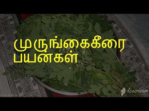 முருங்கை கீரையின் பயன்கள் || Murungai keerai benefits in tamil ||  murungai keerai sambar recipes