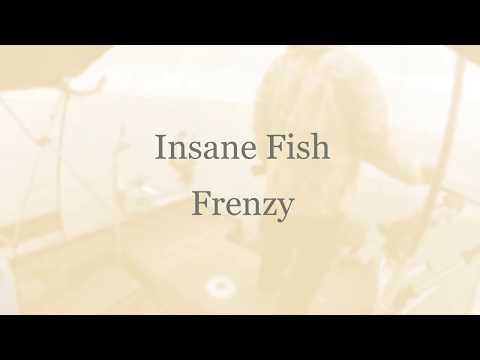 Insane Fish Frenzy