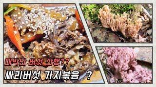 대박난 싸리버섯 산행 싸리버섯볶음  요리