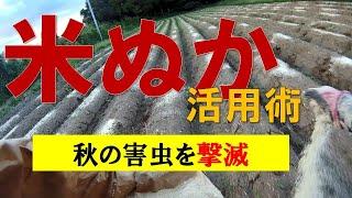 【米ぬか活用術】秋の虫をやっつける