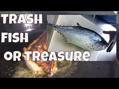 Trash Fish or Treasure ?  Bonita, Clean and Cook 3 Ways