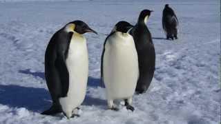 Adelie and Emperor Penguins