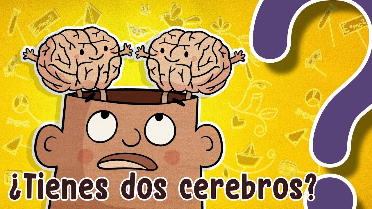 ¿Tienes dos cerebros?- CuriosaMente 294