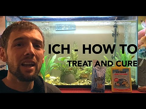 How To Treat And Cure Ich (Ick) In An Aquarium - 4 Easy Steps