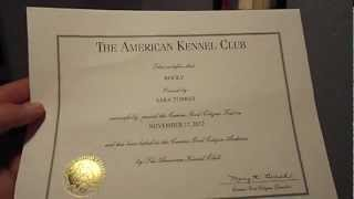 Canine Good Citizen ~ American Kennel Club Certified