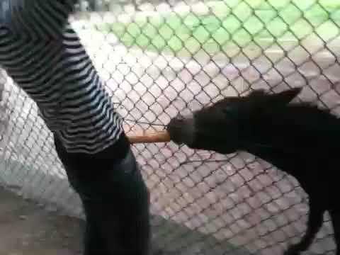 Carri lässt esel lecken - YouTube