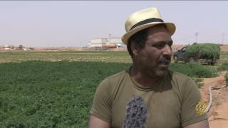 هذا الصباح- الأردن.. تجربة زراعية بمياه الصرف الصحي
