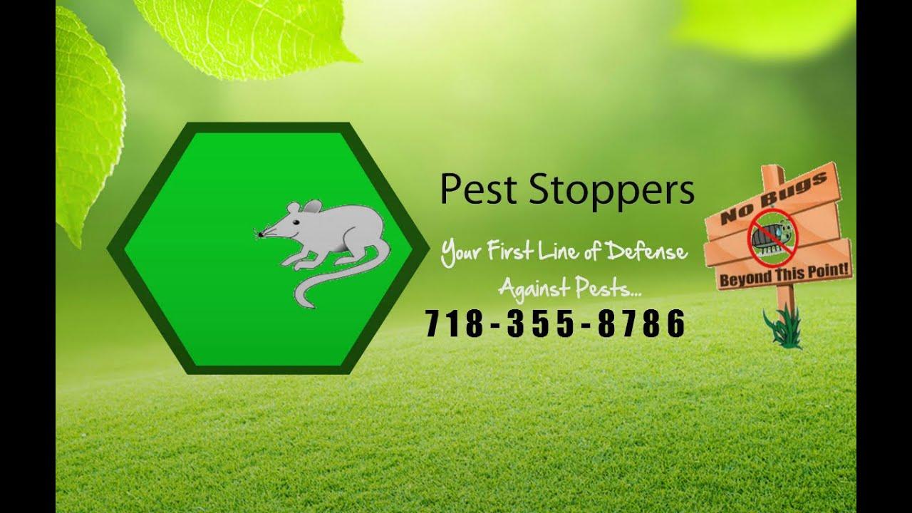 Bed Bug Exterminator Brooklyn Ny Bed Bug Inspection Brooklyn Ny
