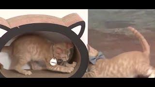 It's National Kitten Day!