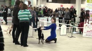 Выставка собак Санкт-Петербург 23.10.2011 (Гарден Сити)