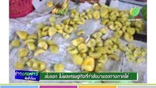 ข่าวเกษตรต้นชั่วโมง ส้มแขก ไม้ผลเศรษฐกิจ