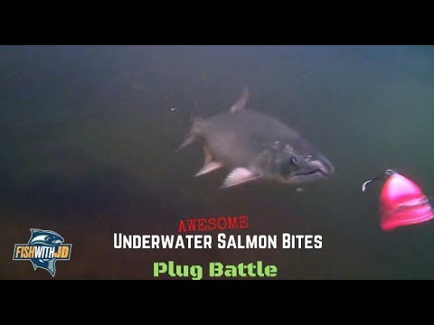 Awesome Underwater Salmon Strikes (Plug Bites)