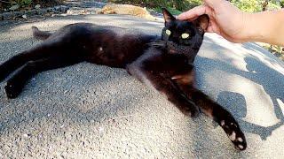 黒猫と茶トラ猫が音楽の演奏を聴きながらウトウトとお昼寝してしまう