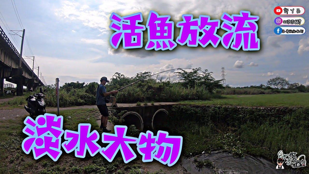 活魚放流 屏東河濱公園舊鐵橋 小魚換大魚 上興戰神磯5號