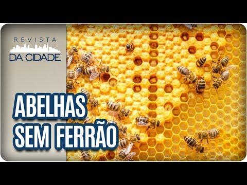 Abelhas Sem Ferrão - Revista Da Cidade (14/11/2017)