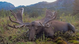 Record Book Canadian Moose Hunt