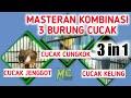 Suara Burung Cucak Jenggot Cucak Cungkok Cucak Keling Kompilasi Untuk Bahan Masteran  Mp3 - Mp4 Download