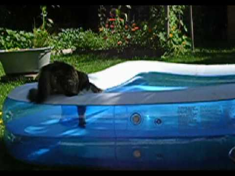 katze f llt ins wasser pool youtube. Black Bedroom Furniture Sets. Home Design Ideas
