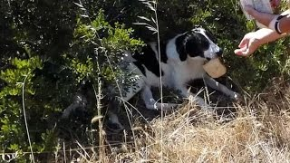 Video 39 Degrees Heatwave, dogs guarding the herd goats, thirst and hunger download MP3, 3GP, MP4, WEBM, AVI, FLV April 2018