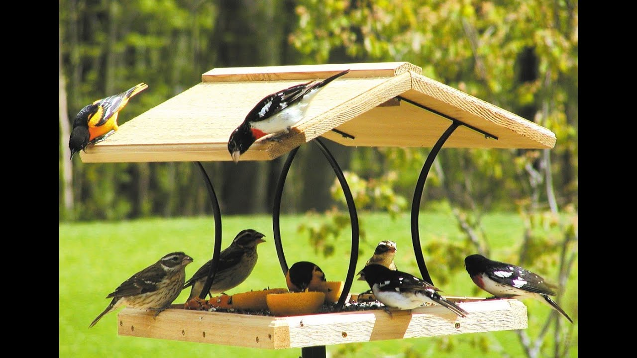 20 Easy and Beautiful Bird Feeder Crafts (homemade) - YouTube