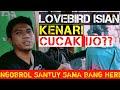 Lovebird Isian Kenari Cucak Ijo  Mp3 - Mp4 Download