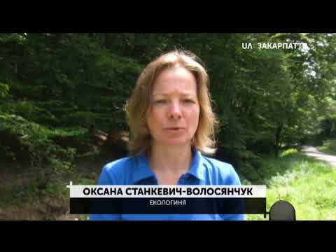 Звіти наживо. Про 100 днів роботи на посаді звітує голова Закарпатської ОДА Олексій Петров(06.08.20)