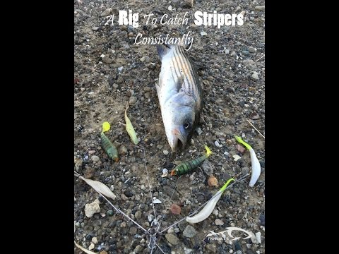 A Rig To Catch Stripers Consistantly