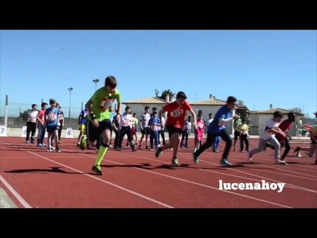 Vídeo noticia: 400 alumnos participan en las Olimpiadas Atléticas escolares de Lucena