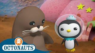 Octonauts - Cute Sea Creatures | Cartoons for Kids | Underwater Sea Education
