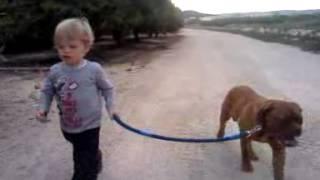 Paseo Con Perro Dogo De Burdeos (dogo De Bordeaux)