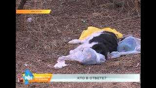 Ситуация с разлагающимися телами животных в одном из микрорайонов Иркутска заинтересовала полицию