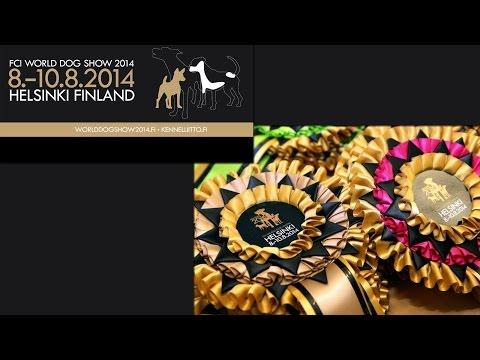 FCI World Dog Show - 2014:   Kleinspitz