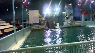Dolphin Show In Riyadh