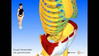 Vidéo sonorisée Les muscles abdominaux