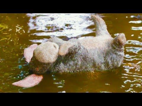 CHRISTOPHER ROBIN 'Eeyore Rescue' Movie Clip
